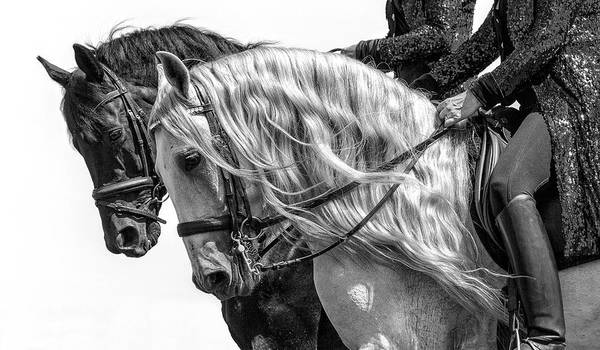 Photograph - Black And White by Wes and Dotty Weber