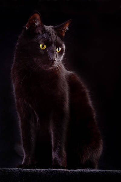 Black Cats Photograph - Black Cat by Dirk Ercken