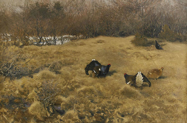 Swedish Painters Wall Art - Painting - Black Grouse Displaying by Bruno Liljefors