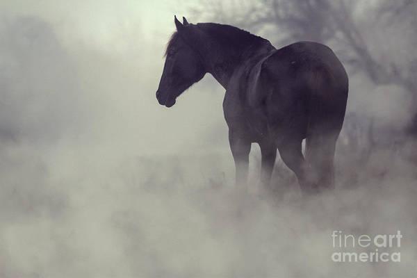 Photograph - Black Horse In The Dark Mist by Dimitar Hristov