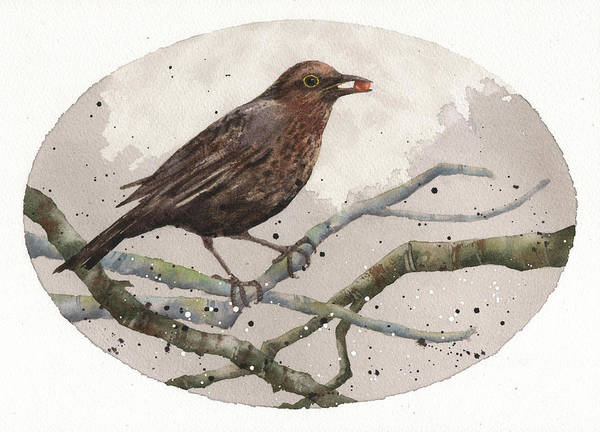 Wall Art - Painting - Blackbird Painting by Alison Fennell