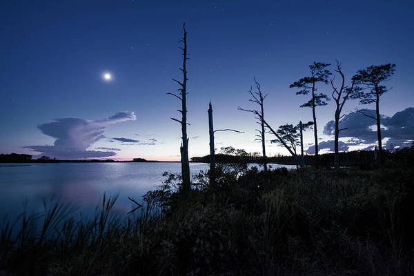 National Wildlife Refuge Wall Art - Photograph - Blackwater Blues  by Robert Fawcett