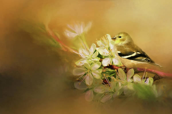 Wall Art - Photograph - Blooming Finch by Lana Trussell