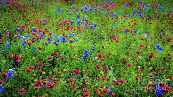 Blooming Wildflowers 537 Art Print