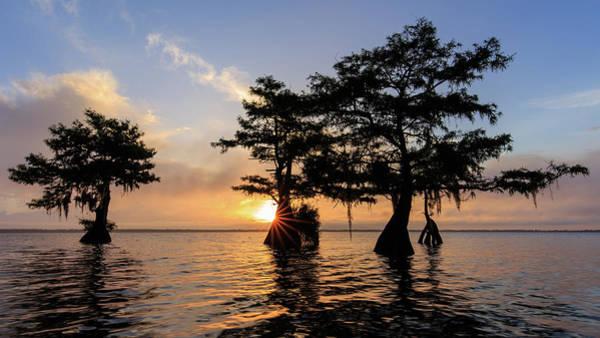 Blue Cypress Lake Morning Art Print