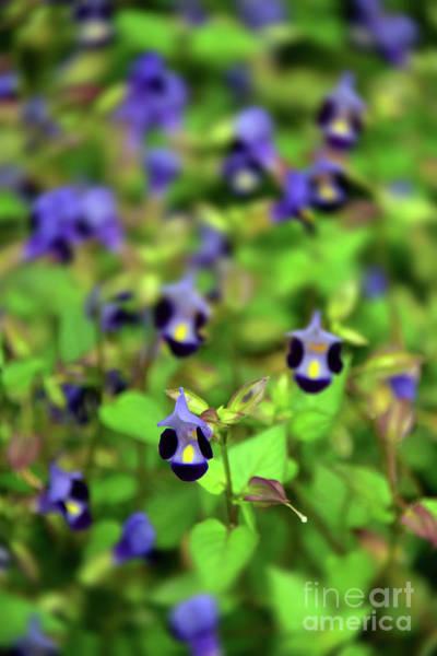 Wall Art - Photograph - Blue Flowers by Svetlana Sewell