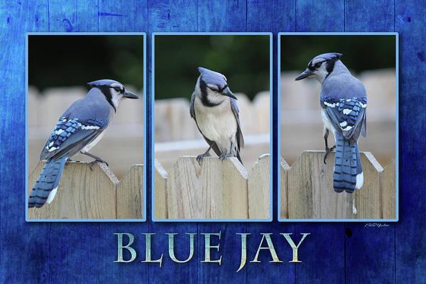 Photograph - Blue Jay by Ericamaxine Price