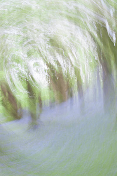 Photograph - Bluebell Woods Abstract Vi by Helen Northcott