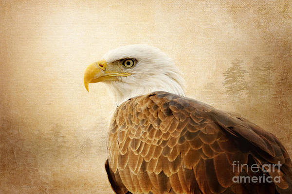 Photograph - Born Free by Beve Brown-Clark Photography