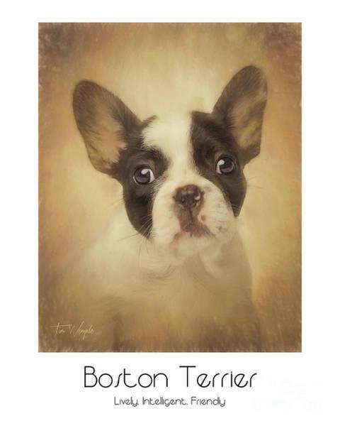Digital Art - Boston Terrier Poster by Tim Wemple