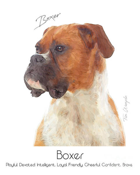 Digital Art - Boxer Poster by Tim Wemple