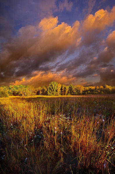 Photograph - Breaking Through by Phil Koch