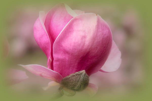 Photograph - A Breath Of Spring by Jessica Jenney