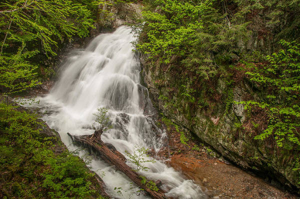 Photograph - Bridle Veil Falls by Brenda Jacobs