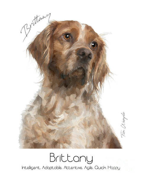 Digital Art - Brittany Poster by Tim Wemple