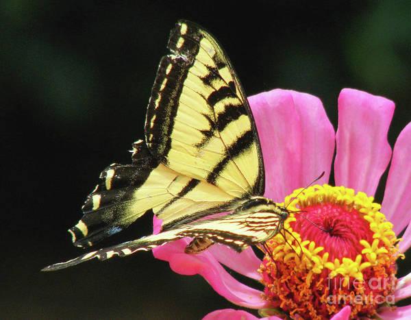 Wall Art - Photograph - Broken Winged Butterfly by Debby Pueschel