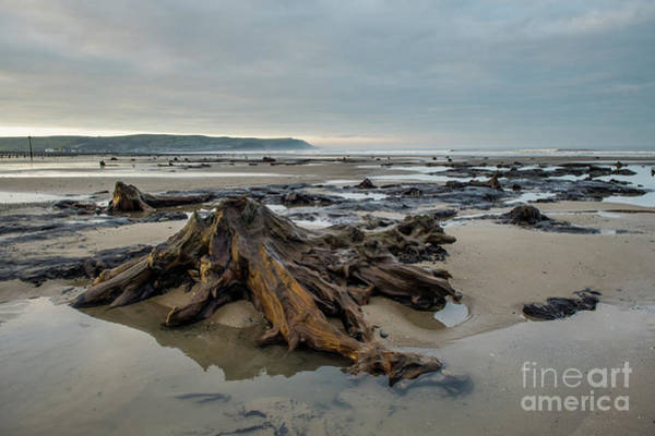 Photograph - Bronze Age Sunken Forest At Borth On The West Wales Coast Uk by Keith Morris