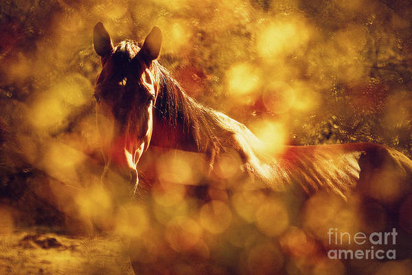 Photograph - Brown Horse Portrait In Summer Day by Dimitar Hristov