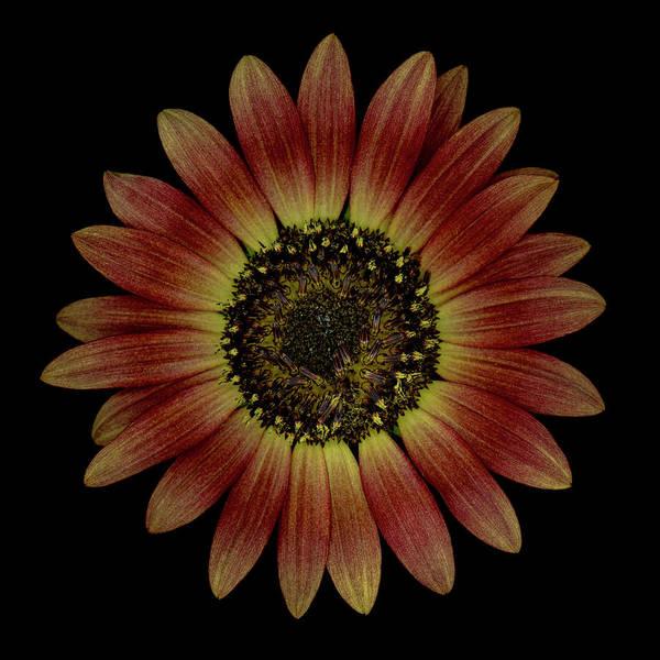 Wall Art - Photograph - Brown Sunflower by Oscar Gutierrez
