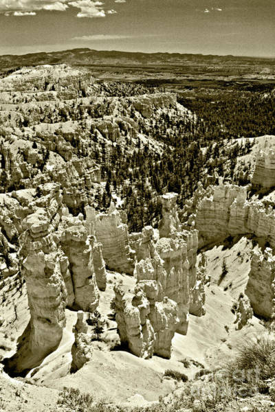 Photograph - Bryce 3 by Pete Hellmann