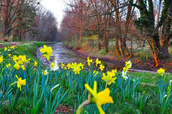 Dafodil Photograph - Bucks County Spring by Bill Cannon