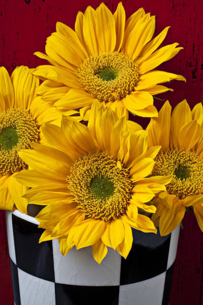 Checker Photograph - Bunch Of Sunflowers by Garry Gay