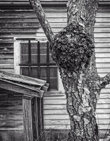 Photograph - Burl And Window by Frank Winters
