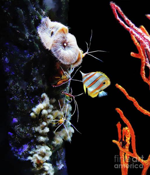 Digital Art - Busy Shrimp by Lisa Redfern
