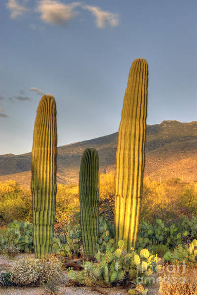 Wall Art - Photograph - Cactus Desert Landscape by Juli Scalzi
