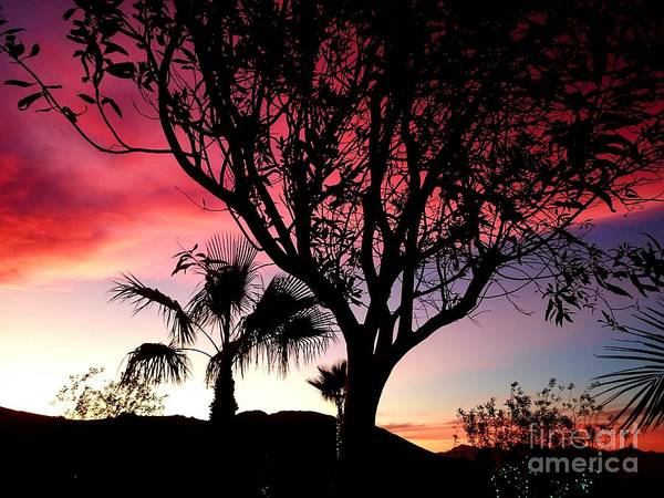 Photograph - California Sunset  by Guy Hoffman