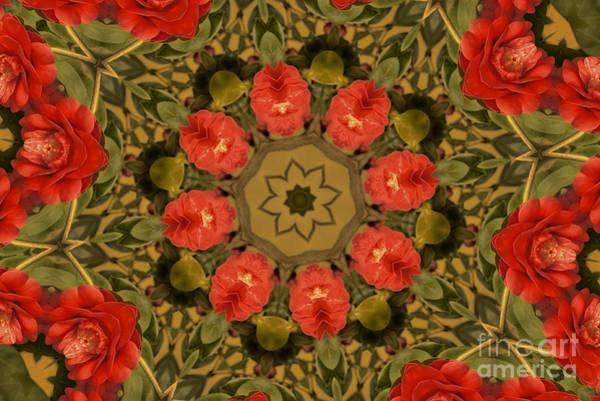 Photograph - Camellia by Elaine Teague