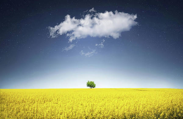 Green Tree Wall Art - Photograph - Canola Field by Bess Hamiti