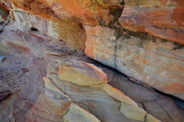 Photograph - Canyon Of Color In Valley Of Fire by Ray Mathis
