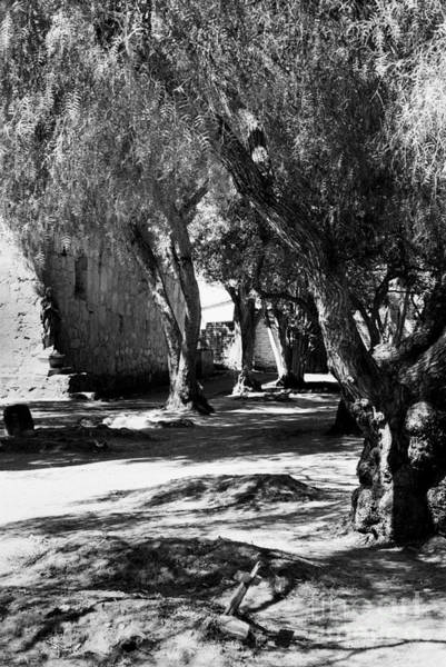 Photograph - Carmel Mission Cemetery by Paul W Faust - Impressions of Light