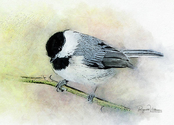 Photograph - Carolina Chickadee by Reynaldo Williams