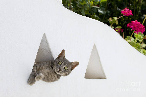 Laying Out Photograph - Cat In A Wall by Jean-Louis Klein & Marie-Luce Hubert