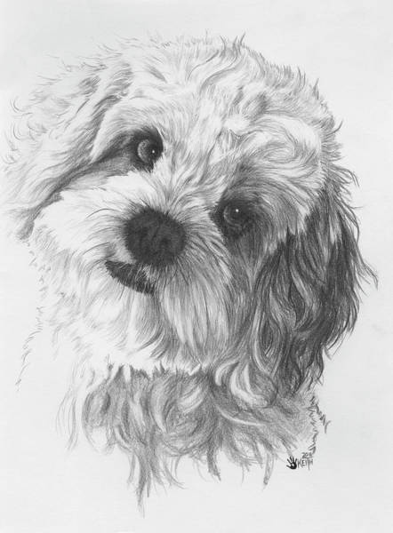 Mutt Drawing - Cava-chon by Barbara Keith