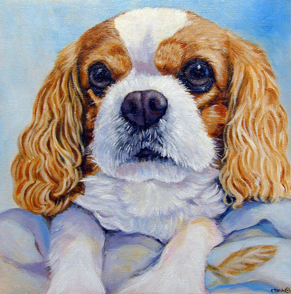 King Charles Spaniel Painting - Cavalier King Charles Spaniel by Lyn Cook