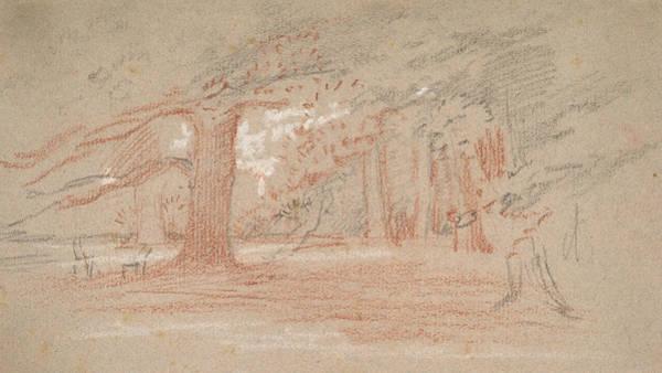 Wall Art - Drawing - Cedar Trees In A Park by George Richmond