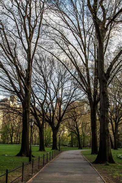 Photograph - Central Park Spring by Robert J Caputo
