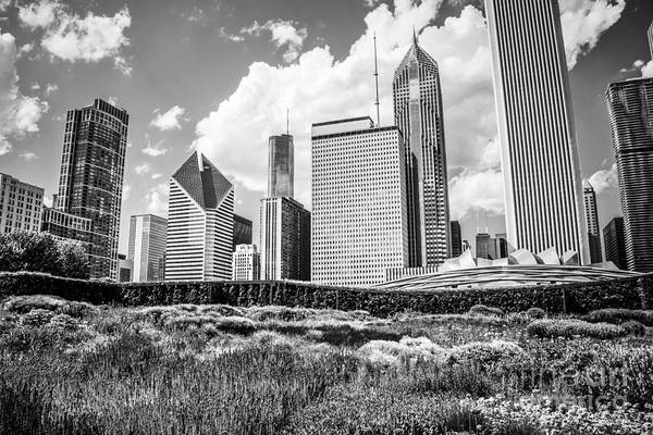 Chicago Black White Wall Art - Photograph - Chicago Skyline At Lurie Garden Black And White Photo by Paul Velgos