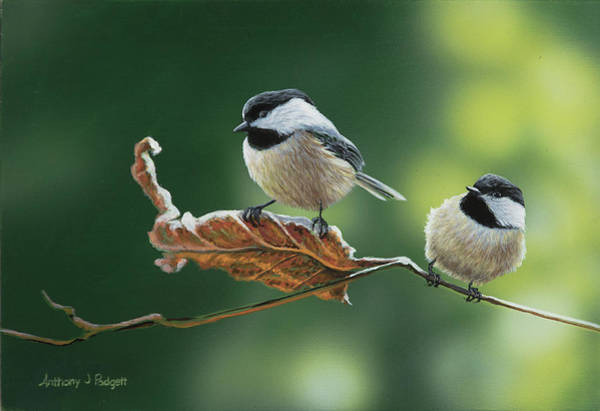 Painting - Chickadees by Anthony J Padgett