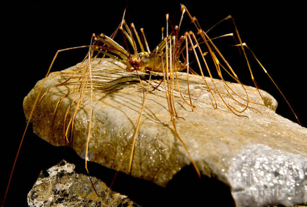 Wall Art - Photograph - Chinese Cave House Centipede by Dant� Fenolio