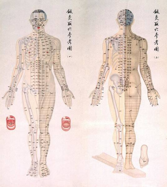 Anatomy Wall Art - Photograph - Chinese Chart Of Acupuncture Points by Everett