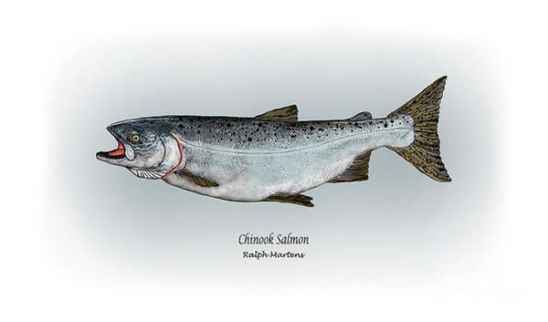 Angling Art Wall Art - Painting - Chinook Salmon by Ralph Martens
