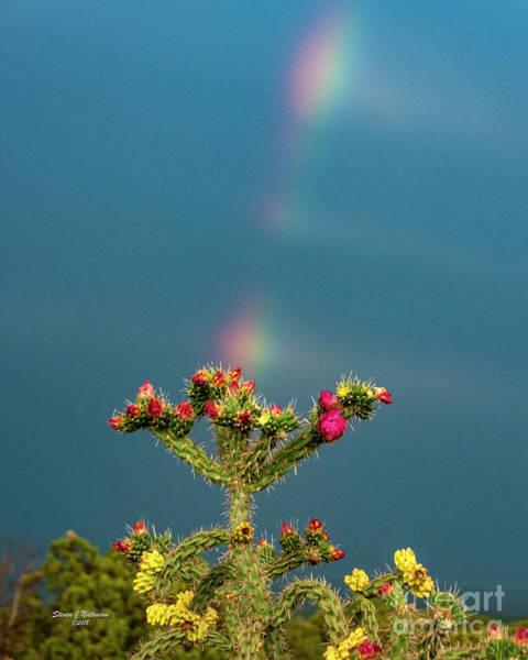 Photograph - Cholla Rainbow by Steven Natanson