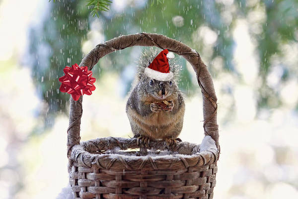 Photograph - Christmas Squirrel by Peggy Collins