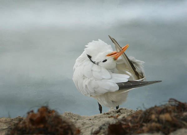 Elegant Tern Wall Art - Photograph - Clean Machine by Fraida Gutovich