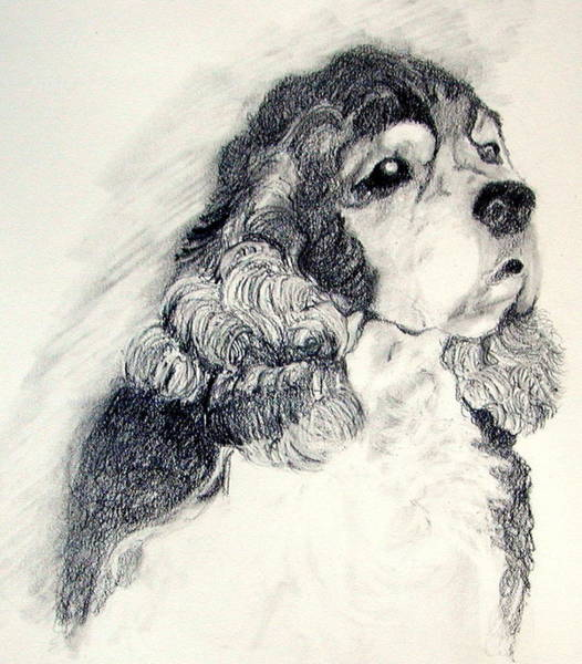 Cocker Spaniel Painting - Cocker Spaniel by Susan A Becker