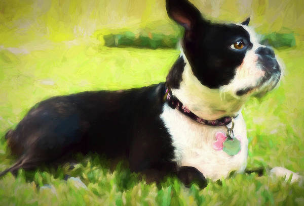 Photograph - Coco by Elijah Knight